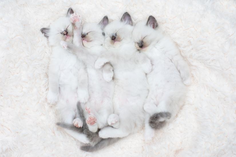 kittens7