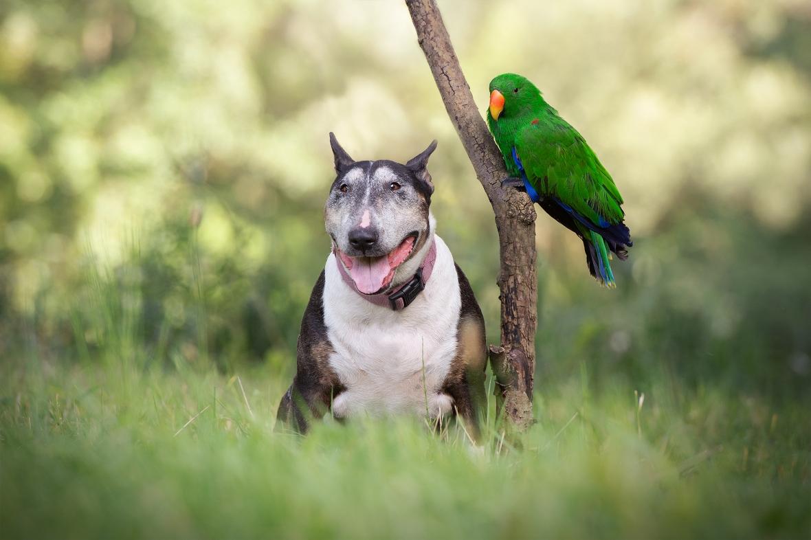 papegaai1